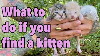 What To Do If You Find a Kitten  How to Make the Right Call!