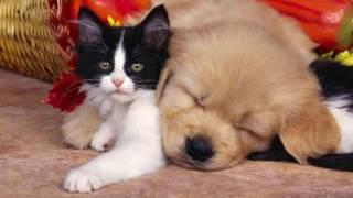 Красивые коты и собаки.
