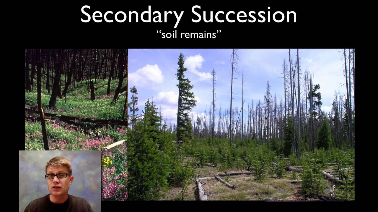 Ecological Succession Youtube