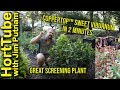 Coppertop™ Sweet Viburnum in 2 Minutes - Great Screening Plant