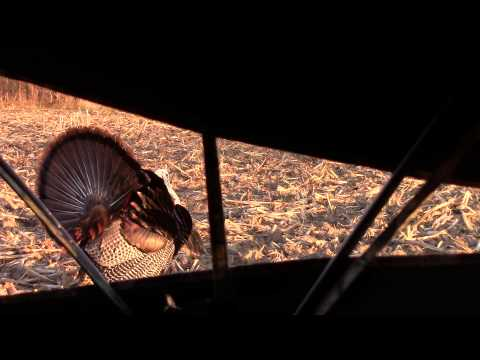 Crossbow Turkey Hunt 2015