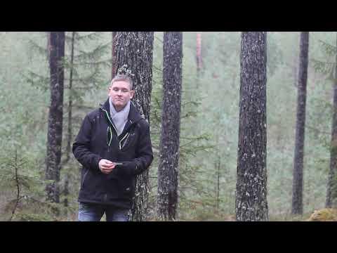 Metsakasvatuse ABC (Uuendusraie ja säilikpuud)