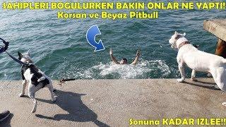 Deniz'de Sahibinin Boğulduğunu Gören Amstaff Cinsi Köpeklerin Tepkisi Bakın Ne Oldu !!!