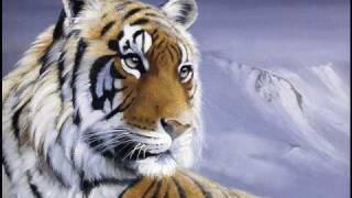 Survivor - Eye Of The Tiger (with lyrics) music video