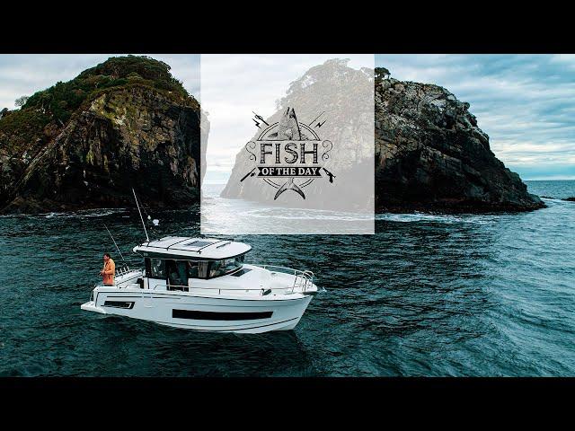 Fish of the Day I Saison 4. Épisode 3 – Plongeon au cœur d'une jungle d'espèces