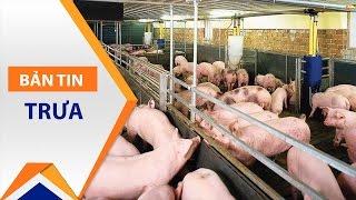 Trung Quốc mua lợn trở lại, khủng hoảng tạm qua   VTC1