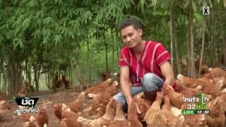 ชาวเขาหันเลี้ยงไก่ไข่ออร์แกนิกส่งห้าง | 05-06-60 | ชัดข่าวเที่ยง