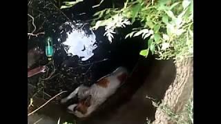 Если опоздали бы чуть-чуть,собака умерла бы.. спасли собаку.г.Самара. (Сагро аз марг начот додем)