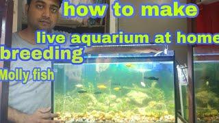 live aquarium how to make live aquarium how to breeding Molly fish