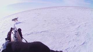 степные охотники 6/2, 2016г- охота на волка (Wolf hunting)