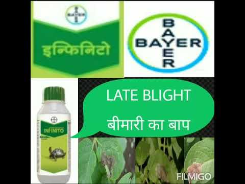 Infinito fungicide bayer crop science all informations in apna krishi sansar youtube channel