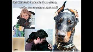 "СЕМИНАР: ""Проблемы поведения: Отказник или собака из приюта"""
