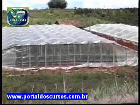 Curso de como construir estufa para horti fruticultura em - Tipos de estufas ...