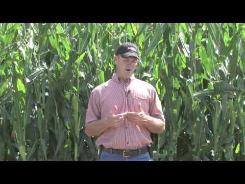 SMS™ Software: Growers' Perspectives - 2010-13