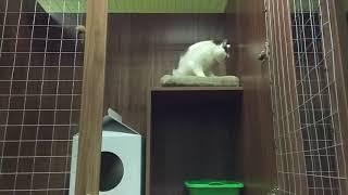 #CatsVilla гостиница для животных Киев - Вышгород