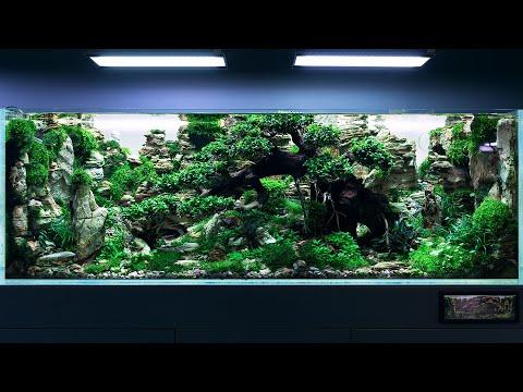 the-450-liters-contest-level-aquascape-at-green-aqua---4k-cinematic