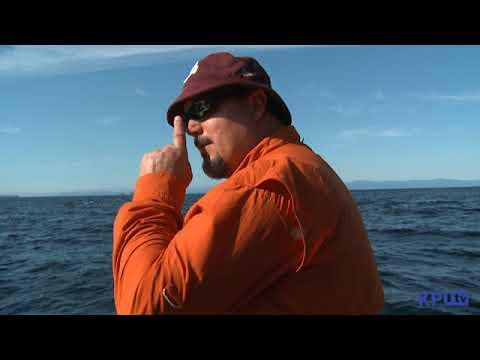 Black Cod Fishing Zackery And Baranof Fishing Excursions