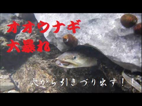 オオウナギ釣り(大暴れ水中映像)