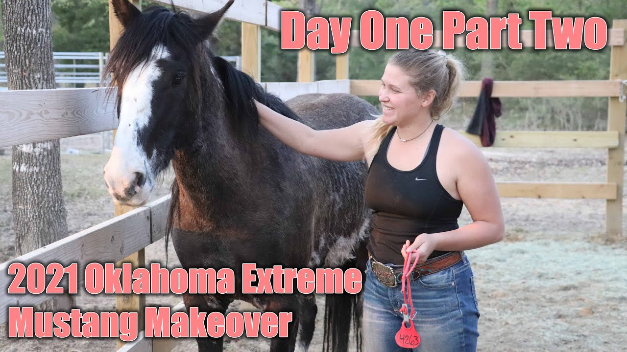 Wild Mustang Day One (part two) | 2021 Oklahoma Extreme Mustang Makeover Ep. 3
