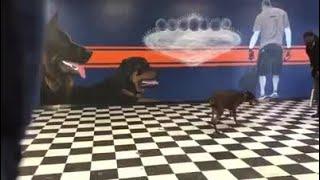Viral video shows dog trainer using baseball bat to train dog