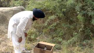 live snakes releas(31-10-2012)vaid gurbachan singh con no-98141-93242
