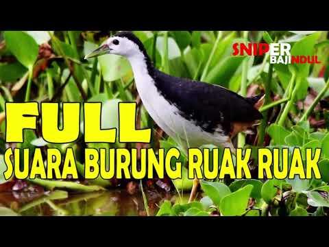 FULL MASTER SUARA BURUNG RUAK RUAK HD