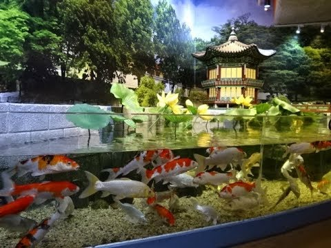 COEX Aquarium, Seoul, South Korea - Amazing Aquarium