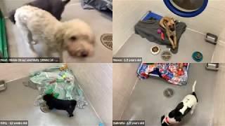 Dogs on Zoom Nashville Humane Association (replay)