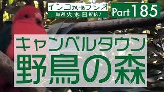 【キャンベルタウン野鳥の森】 サイト:http://yacho-nomori.kosi-kanri...