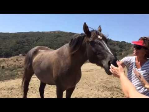 Breeze w/ Sheldon Wild Horses at Return to Freedom