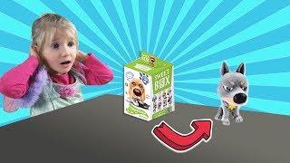 SWEET BOX 2 Fluffy Doggy Bucks. Wood Milo Toy and marmalade HD