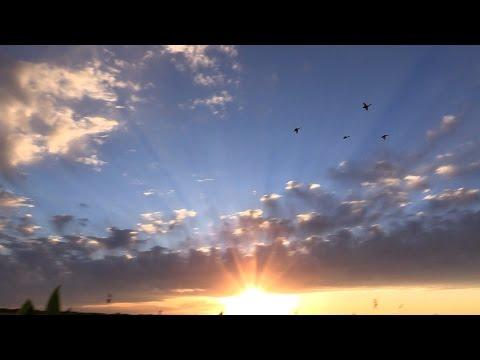 Argentine : Canards à la folie.../ Argentina : Duck madness
