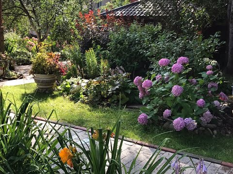 Мой прекрасный сад в августе