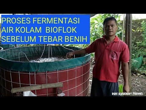 Proses Fermentasi Air Kolam Bioflok Sebelum Tebar Benih Youtube