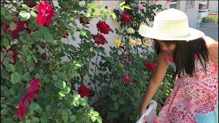 BEAUTIFUL LITTLE ASIAN GIRL | Malaya | Rose Garden