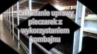 Maszynowe zakładanie produkcji pieczarek