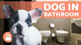 Why Does MY DOG Follow Me into the BATHROOM? 🚽🚶♂️🐕 (3 Reasons)