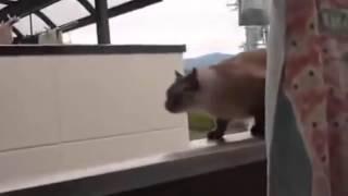 Кот прыгает с балкона