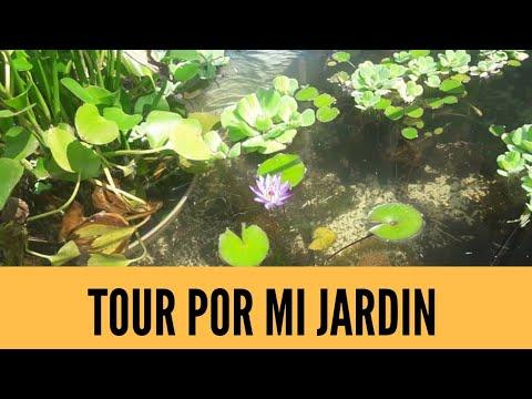tour-por-mi-jardín:-mis-plantas-de-interior-y-exterior