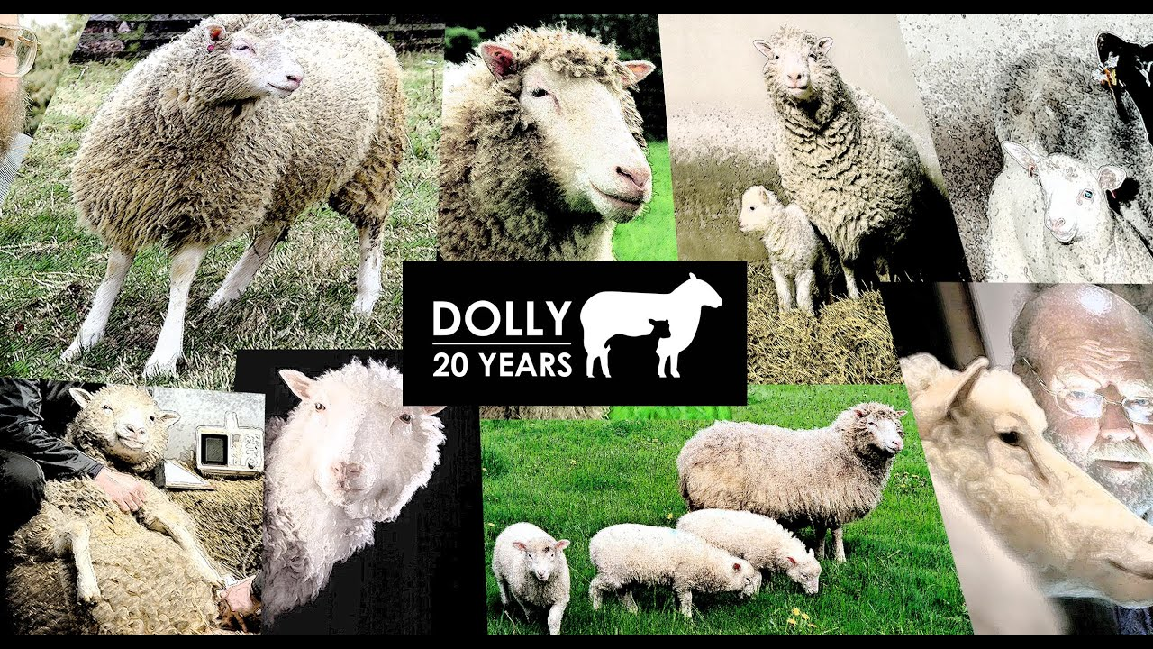 How much do you know about Dolly the Sheep?