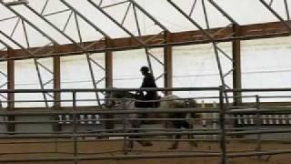 Dapple Gray Percheron:  Oberon in Training at Higher Ground