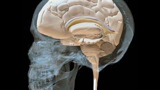 Craniosacral Biodynamics with Roger Gilchrist