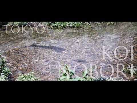 【BGM風景動画】川の中の、こいのぼり(白子川) Shirako River, Nerima, Tokyo.