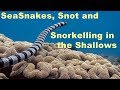 Sea Snakes, Snot and Snorkelling in the Shallows