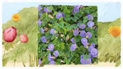 Pest Management Insect Control 817-381-2468 Arlington TX Pest Inspection