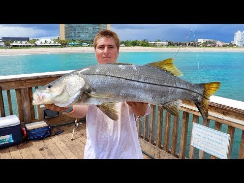 Catch And Cook SNOOK! Is All The Hype True?!? Summer 2017