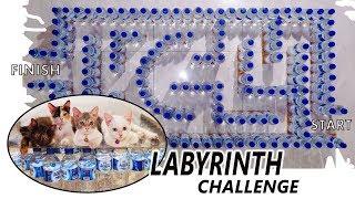 Bikin Permainan Kucing dari Botol Plastik // LABYRINTH CHALLENGE