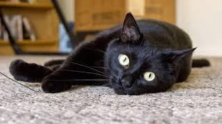 Можно ли стерилизовать кошку, если она не рожала? Можно ли стерилизовать не рожавшую кошку?