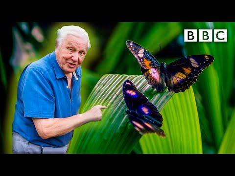 Attenborough's Life in Colour: Trailer ???? BBC