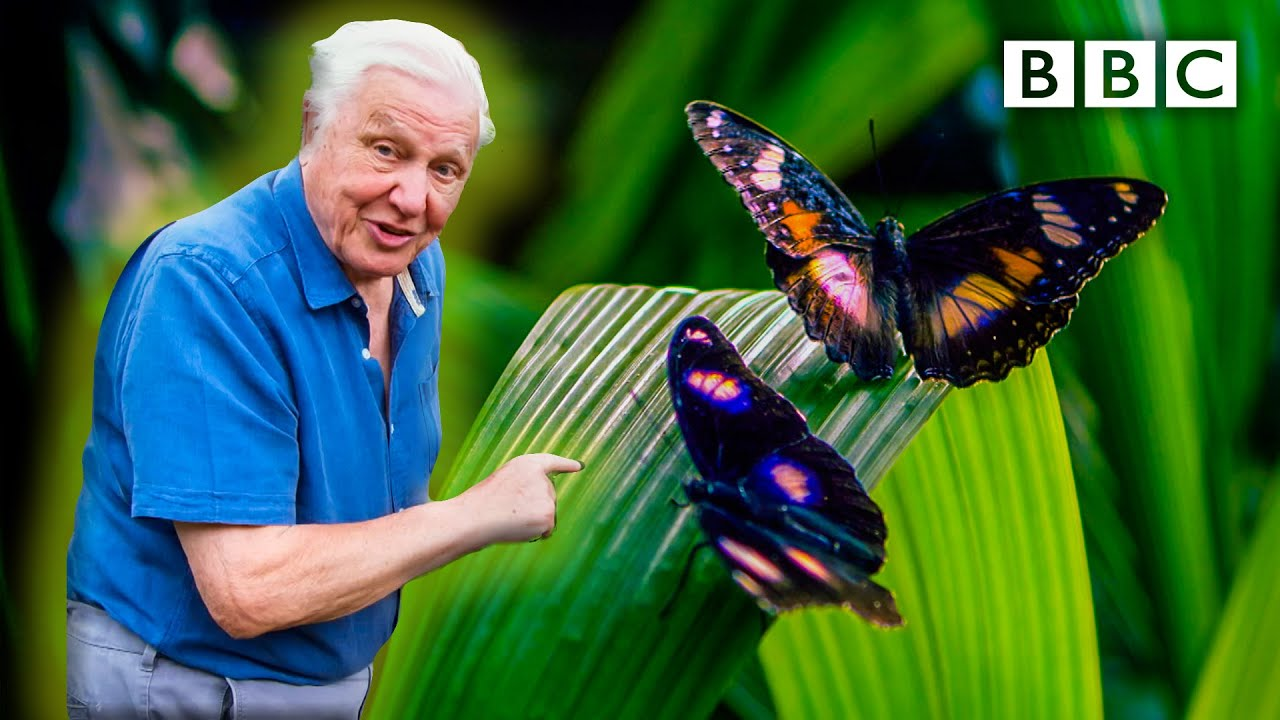 PREVIEW: Attenborough's Life In Colour, BBC One